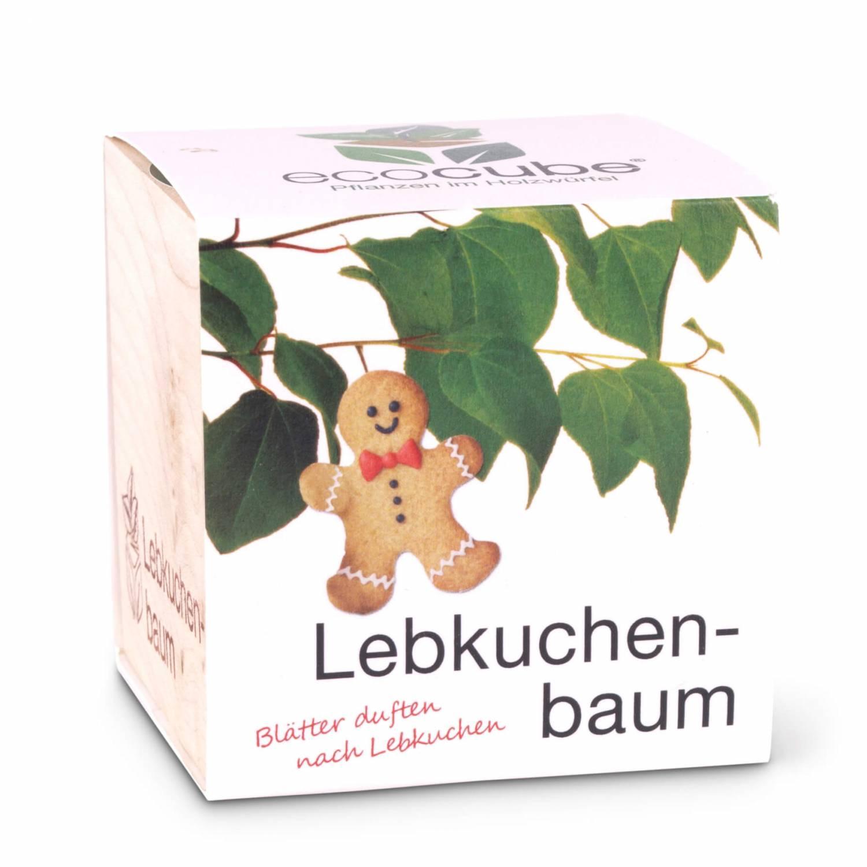 Pflanzw rfel lebkuchenbaum online kaufen - Lebkuchenbaum kaufen ...